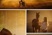 Horse portret