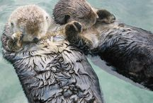 Otters!! / by Macey Long