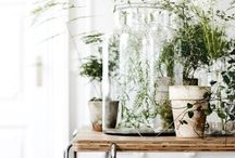 plants | zen your desk / Using feng shui, space clearing + plants in your office, or on your desk, to purify the air, remove toxins + bring abundance into your life!
