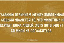 Прикольные кошки))