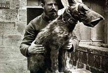 Courageous WW1 messenger dog