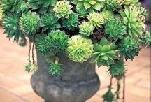 ideas para jardines secos