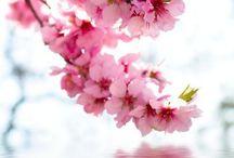 moodboard primavera
