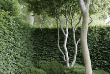 Gardens and the outdoors / Inspiration for beautiful outdoor spaces