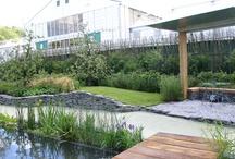 pond idea
