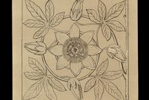 Color Our Collections / Need a break? Color one of these images from our collections!