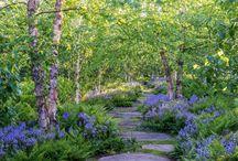 Jesse's Landscape Inspirations / Our favorite plants and landscapes.