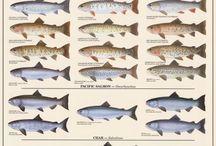 fish type
