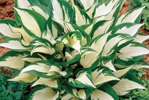 Πολυετή  - Τροπικά  φυτά  - φοίνικες  - φτέρες - ορχιδέες  - βιγόνιες