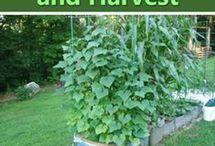 Inspiration | Vegetable garden