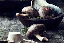 grzyby mushrooms
