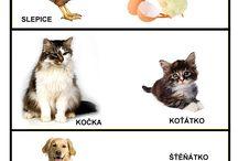 Zvířátka a jejich mláďata