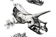 Animal Bones