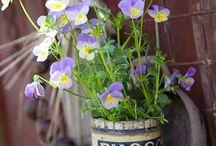 Blomkrukor/Flowerpots