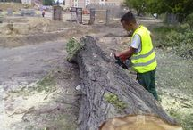 Cięcie drzew i krzewów