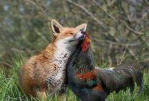 ystävyyttä eri eläinten kesken