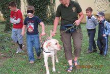 """Vakvezető kutyák Kalocsán / A Baráthegyi Vakvezető Kutya Iskola meghívást kapott a """"Te is lehetnél…"""" Sérült és egészséges emberek találkozójára, hogy az ott megjelenő gyermekekkel és felnőttekkel megismertessük a vakvezető kutyával közlekedők világát. Szeptember 5-én, pénteken négy kutyával látogattunk el Kalocsára, és rengeteg gyermek és felnőtt kipróbálhatta, milyen érzés vakon bízni egy vakvezető kutyában."""