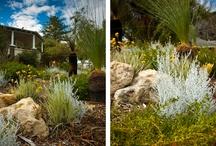 Front verge garden