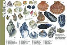 Stenen en schelpen