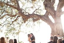 Wedding / ... / by Sue Crowder