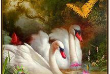 KHB - Svaner og andre smukke dyr / Svaner - de smukkeste fugle