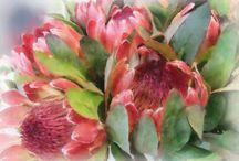 Protea in Art / As a flower farmer, I am always inspired by the perfection found in flowers and thrilled by the way they impact and arouse all of us differently, which for me, is certainly proof of their natural artistic qualities. With that in mind, I thought it might be nice to share the different ways artists have used protea in their work – some have used them to enhance beauty while others have used them to tell the story of life itself.