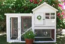 Bunny cage
