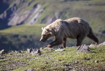 inalto parks / Collection di immagini e link relativi al mondo delle aree protette