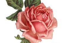 Roses ~ Roses ~ Roses / Printable Pics 4 Decoupage