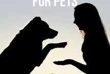Cannabis & Animales/Pets