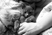 Cute Cat Men