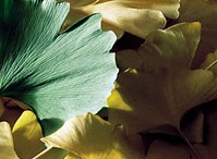 Herbs / by Sarah Haynes