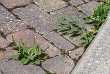 désherbant et jardin ,  jardinage