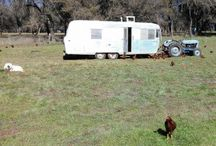 Egg Mobiles and Chicken Tractors