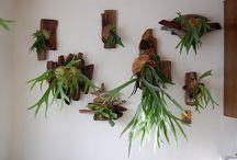 Plants / by Ali Cortes