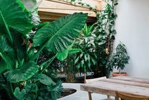 Garden vibez / Outside/ backyard inspirations