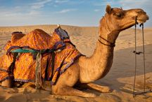 Rajasthan Tourist Attractions / Rajasthan Tourism packages @Discoverindia.net