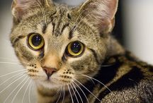 Cats / by Lori Jones