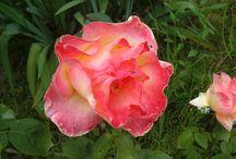 My Flowers from my garden. / fairy tales