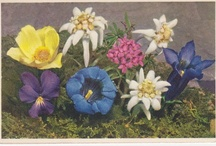 Flower Postcards by Stehli / Another Swiss publisher who produced stunning postcards