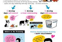 Positive Animal Training