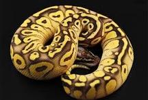 Snakes Wish List