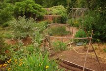   Permaculture   / Permaculture, eco-gardening, micro-agriculture, food self-sufficiency