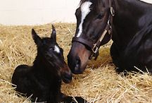 Colt and Filly