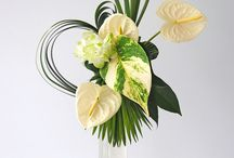 ANTHURIUM Arrangements
