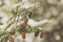 Winter Woodland- bead inspiration