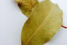 eduard / Gartenpflanzen und Deco
