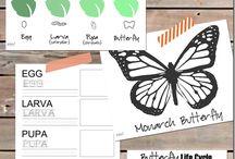 Papillon / Projet école