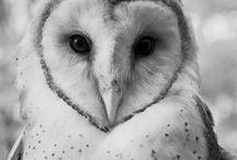 *owls*