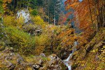 Fall / by Mackenzie Martin